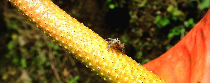 Macro, Insect, Garden, Spider, Fauna, Colombia