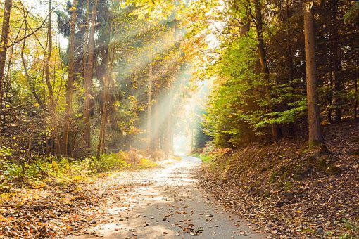 Autumn, Leaves, Forest, Nature, Sunlight, Landscape