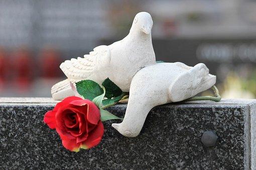 White Doves, Monument, Gravestone, Red Rose, Cemetery