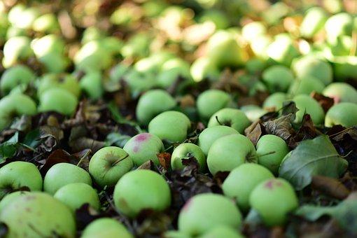 Sad, Apples, In The Fall, Nature, Mature, Season, Fresh