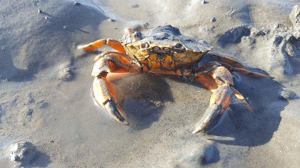 Nature, Wadden Sea, North Sea, Ebb