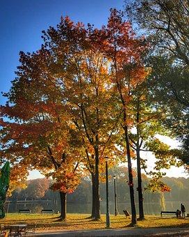 Park, Kraków, Nowa Huta, Bay Nowohucki, Autumn, Oak