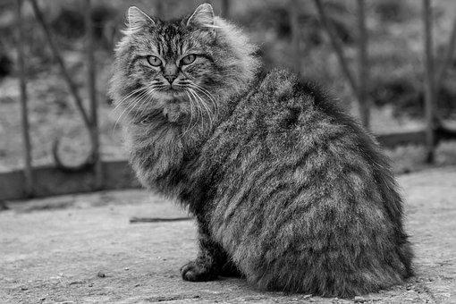 Cat, Black And White, Animal, Kitten, Portrait, Pet