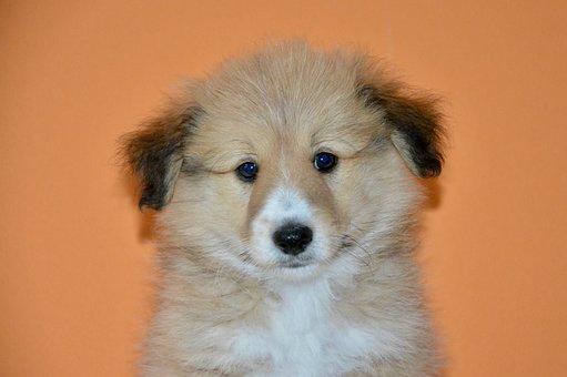 Dog, Pup, Dog Oslo, New Breed Cotland