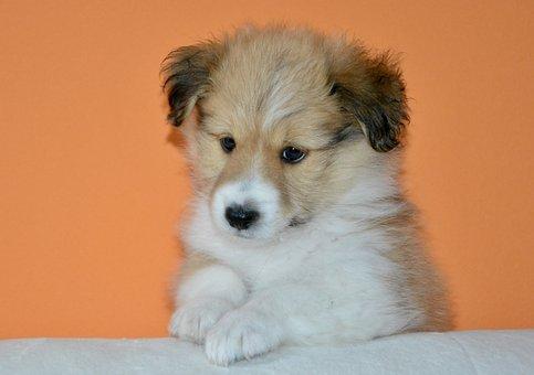 Dog, Pup, Puppy, Dog Oslo, Puppy Dog Cotland, Dog Cross