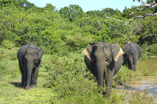 Elephants, Family, Baby Elephant, Safari