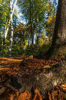Nature, Forest, Autumn, Leaves, Sunrise, Backlighting