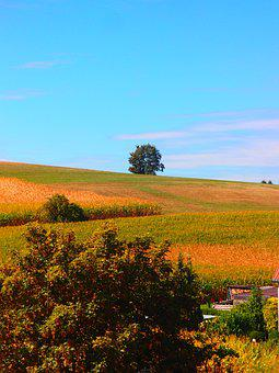 Agriculture, Landscape, Nature, Rural, Tree, Field