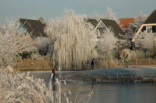Winter, Ripe, Frozen, Ice, White, Tree, Landscape