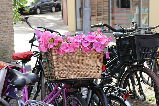 Bicycle Basket, Flowers, Pink Holland, Wheel
