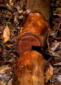 Wood, Branch, Tree, Sawn, Timber, Wet, Rainforest