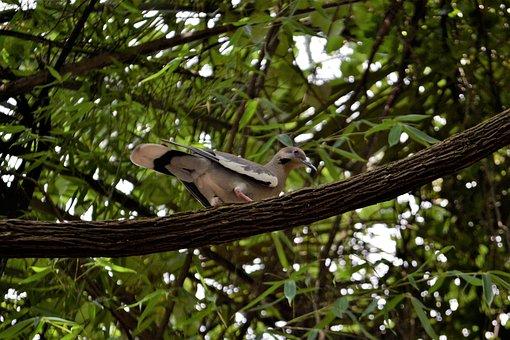 Pigeon, Bird, Watching, Animal, Nature, Fly, Wild