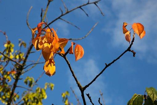 Autumn, Leaves, Fall Color, Abendstimmung