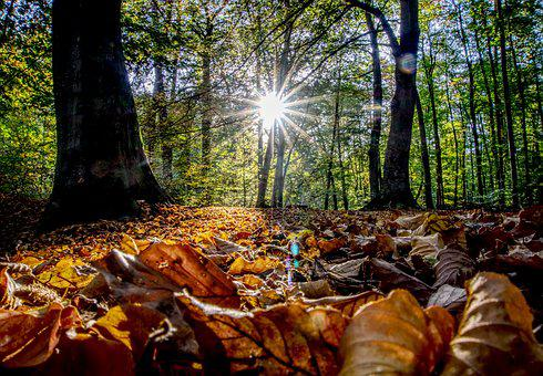 Backlighting, Sun, Sunset, Leaves, Autumn, Colorful