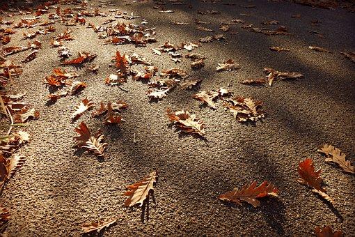 Road, Surface, Bitumen, Autumn Leaves, Fallen, Oak