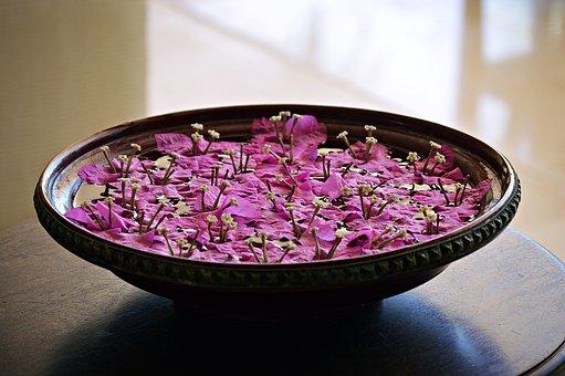 Decoration, Shell, Blossom, Bloom, Flower, Vase, Nature