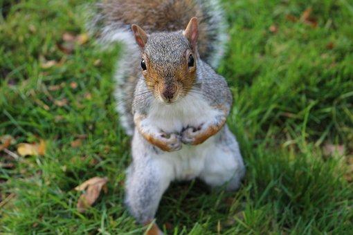 Squirrel, Edinburgh, Botanic Garden, Scotland