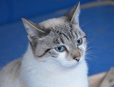 Cat, Pussy, Pussy Cloud, Animal, Feline, Cute, Animals