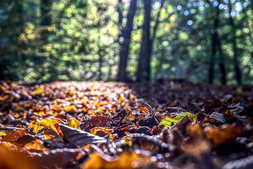 Leaves, Autumn, Colorful, Red, Nature, Forest