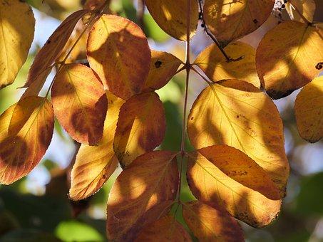 Fall Foliage, Leaves, Colorful, Bright, Color