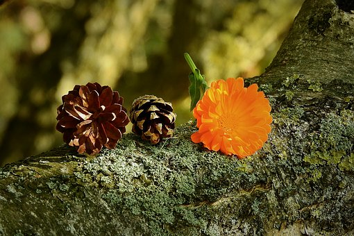 Composition, Cones, Flower, Tree
