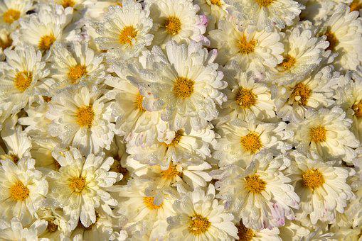 Flowers, White, Many, Bright, Yellow, Autumn