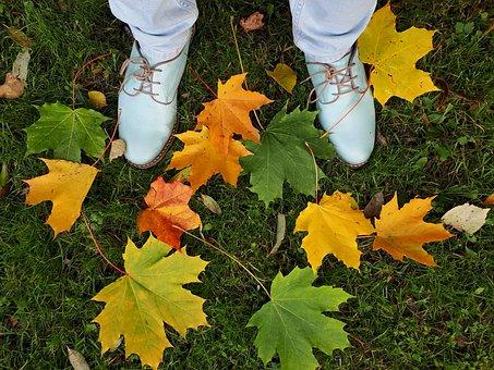 Autumn, Leaves, Colorful, Foliage, Fall, Feet, Grass