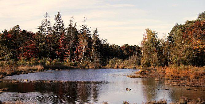 Heide, Forest, Lake, Nature, Landscape, Trees, Autumn