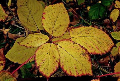 Foliage, Blackberry, Yellow, Autumn, Colors, Garden