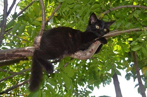 Black Kitten, Pet, Wild, Feline, Hairy, Playful