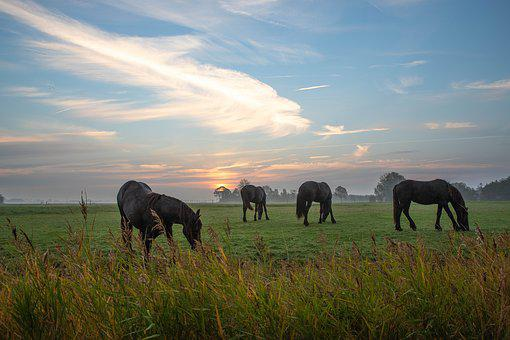 Horse, Noble, Friesian Horse, Animal, Horses, Animals
