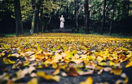 Autumn, Foliage, In The Fall, Colored, Season, Leaf