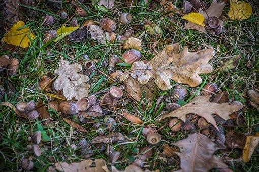 Autumn, Leaves, Nature, Park, Dry