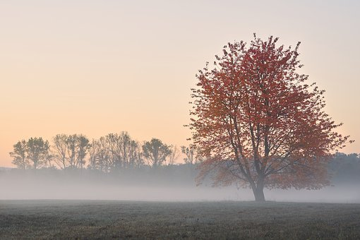 Autumn, Tree, Fog, Mood, Red, Leaves, Fall Foliage
