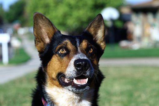 Focus, Dog, Pet, Animal, Canine, Friend, Cute, Love