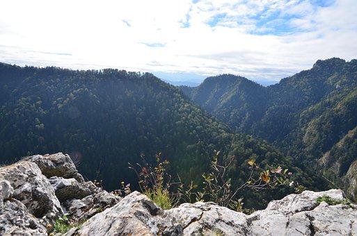 Pieniny, Mountains, Trail, Designation Of The, Tree