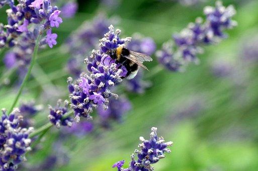 Flowers, Bee, Pollen, Nectar, Pollination, Plant