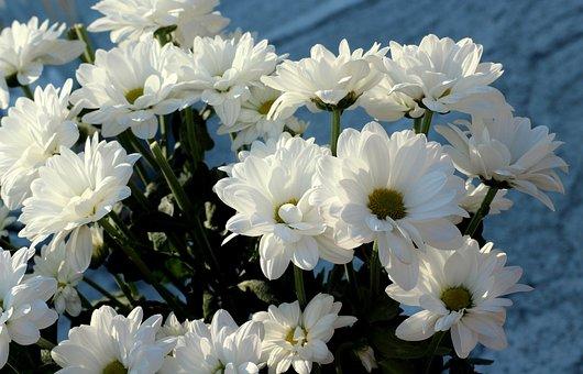 White Flowers, Autumn, Flowers, Season, Figure