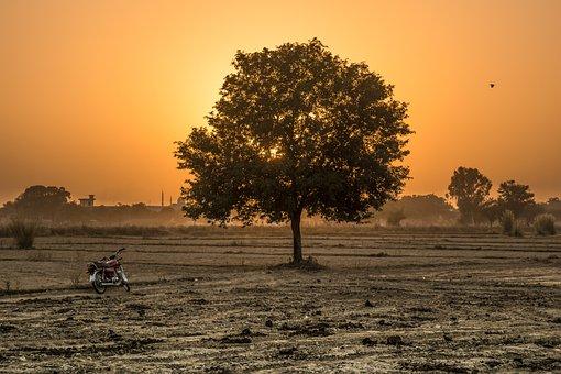 Tree, Sunset, Golden Hour, Landscape, Nature, Sky