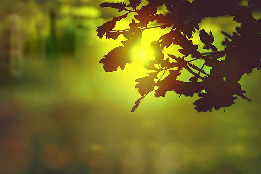 Sun, Sunset, Sky, Mood, Nature, Rest, Evening, Romantic