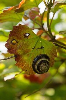 Snail, Sheet, Slimy, Autumn, Slowly, Biology, Nature