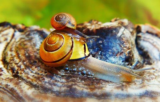 Wstężyk Huntsman, Molluscs, Snails, Mushroom, Hub