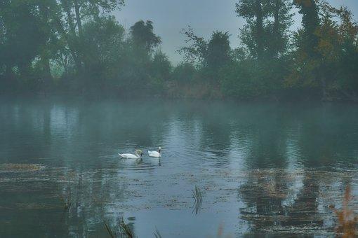Fog, River, Swans