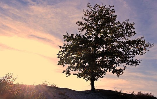 Sunset, Tree, Sky, Clouds, Dusk, Twilight, Evening
