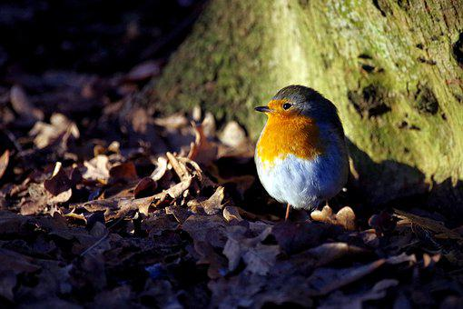 Robin, Winter, Sun, Bird, Winter Magic, Frost, Cold