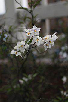 Flowers, White, Women, Beautiful, Garden, Floral