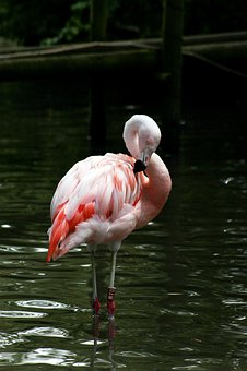 Bird, Zoo, Flamingo, Feather, Colorful, Beak, Tropical