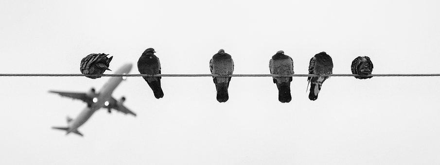The Birds, Aircraft, Thread, Pigeons, Black And White