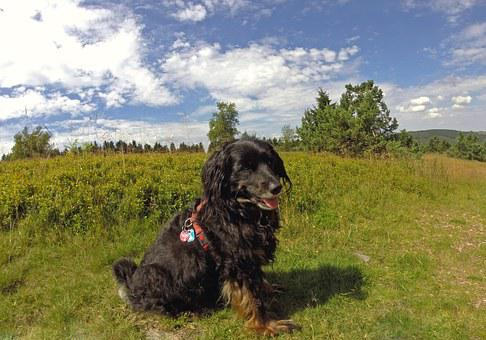 Dog, Summer, Animal, Fur, Nature, Meadow, Color, Pet