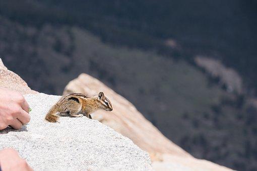 Squirrel, Denver, Animal, Mountain, Rocky, Colorado